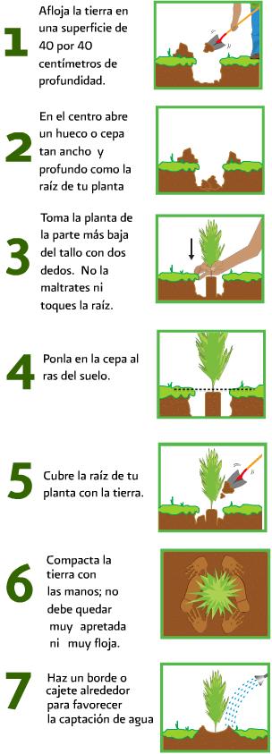 C mo plantar un rbol pumptris l blog 2 0 for Las partes de un arbol en ingles